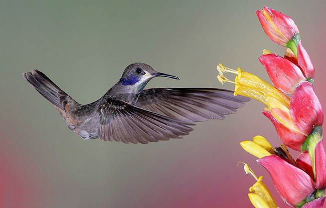 colorful-hummingbirds- (9)