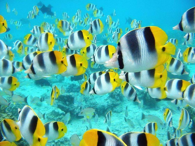colorful-tropical-fishes- (1)