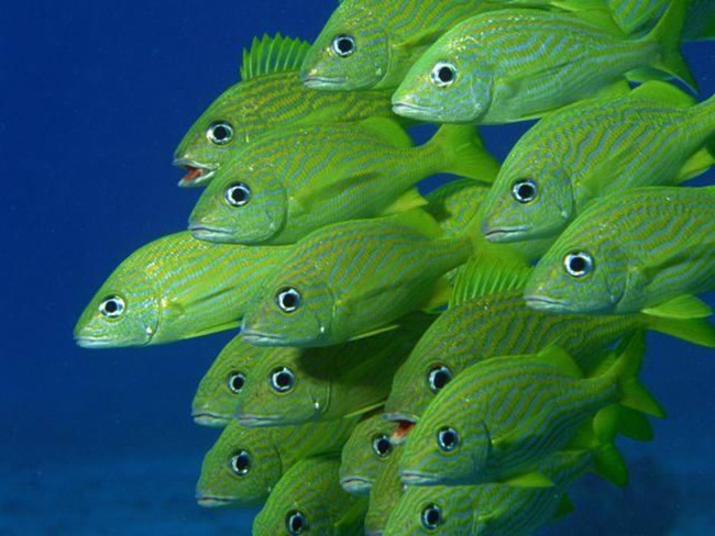 colorful-tropical-fishes- (5)