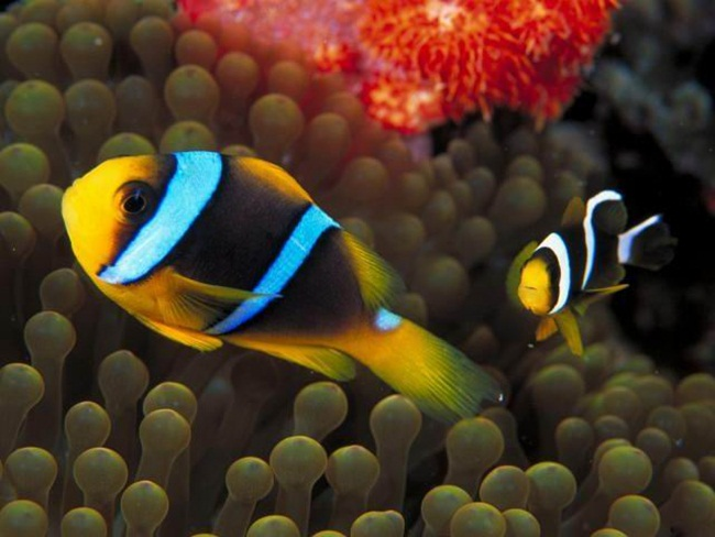 colorful-tropical-fishes- (6)