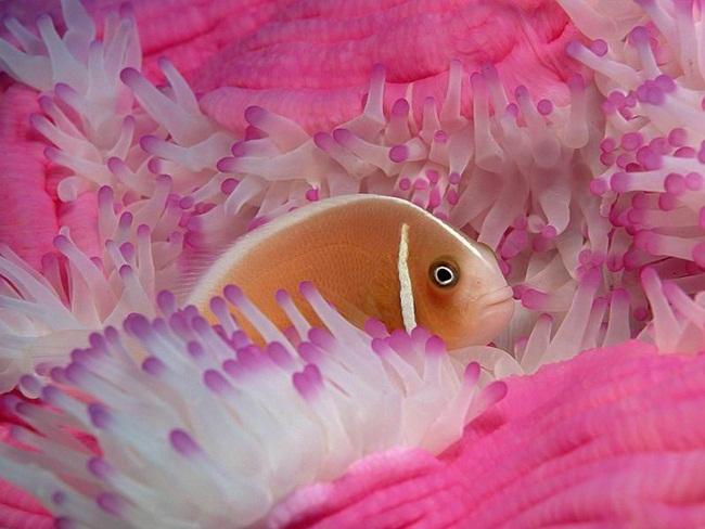colorful-tropical-fishes- (9)