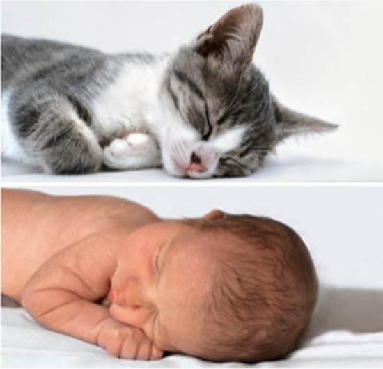 cute-babies-poses-alike-animals-babies- (12)