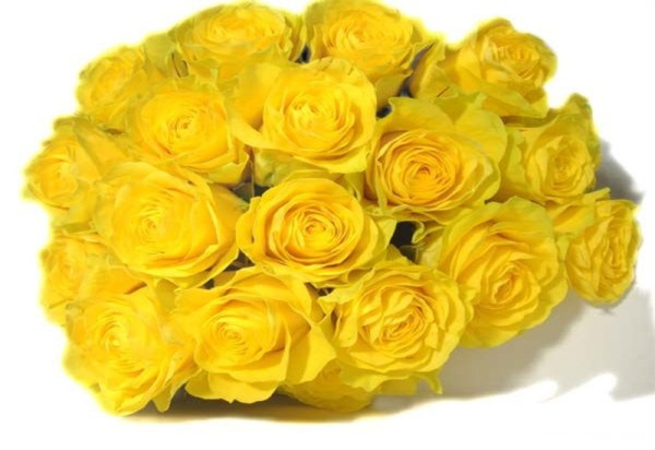 life-in-yellow-color- (8)