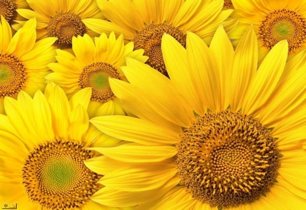 life-in-yellow-color- (21)