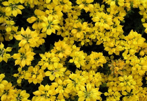 life-in-yellow-color- (27)