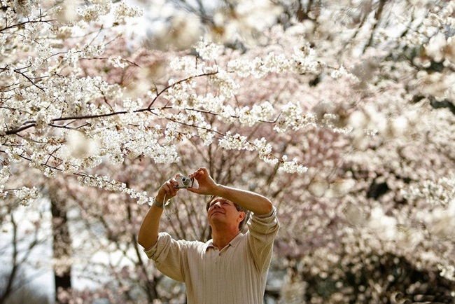 photos-of-cherry-blossom-festival-in-washington- (4)