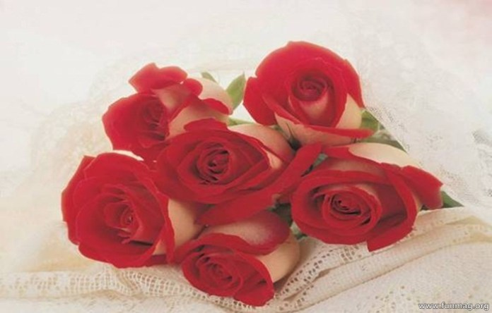 romantic-red-roses-pictures- (15)