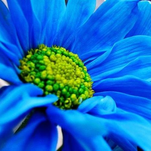 beautiful-colors-of-life- (10)
