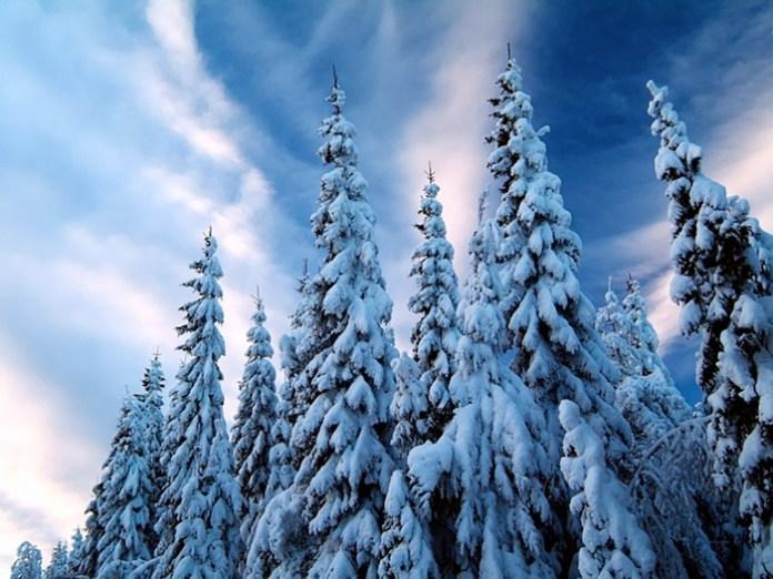 beautiful-winter-scenery- (24)