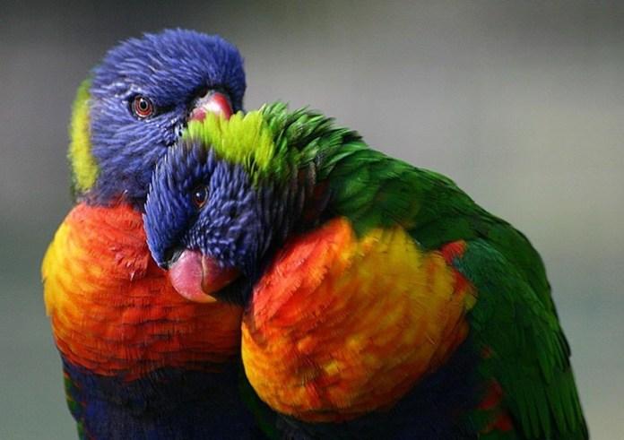 colorful-parrots-26-photos- (3)