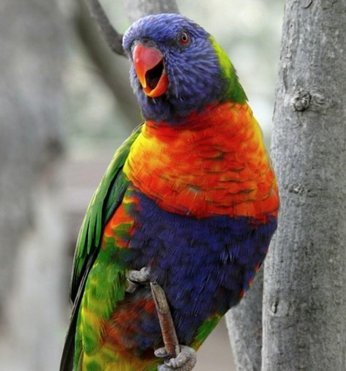 colorful-parrots-26-photos- (18)