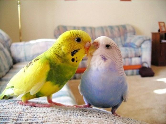 colorful-parrots-26-photos- (19)