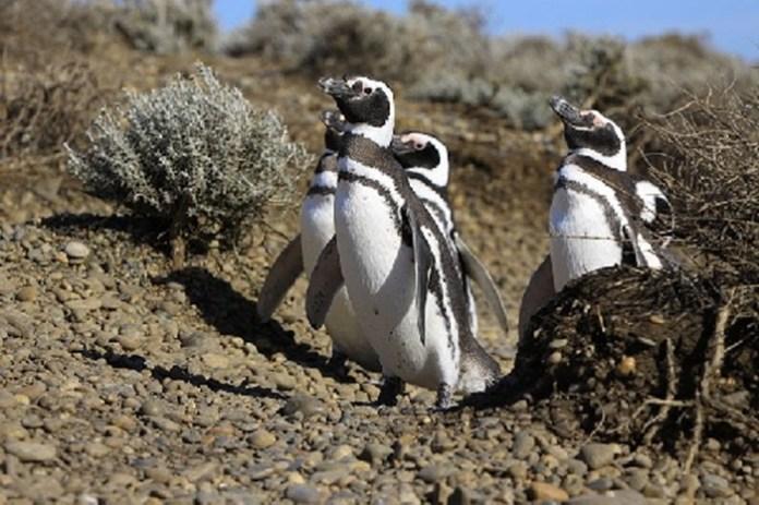 cute-penguin-photos- (5)