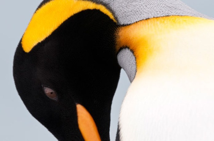 cute-penguin-photos- (9)
