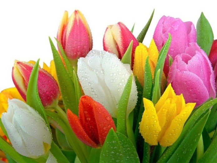 bunch-of-flowers- (5)