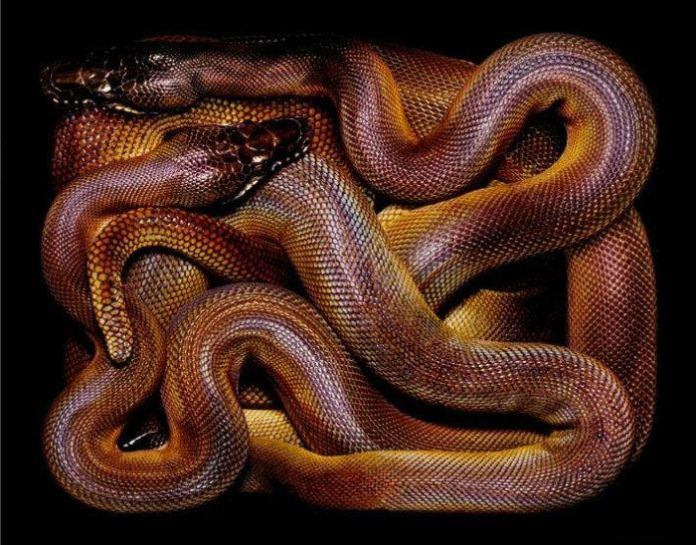 colorful-snakes-16-photos- (13)