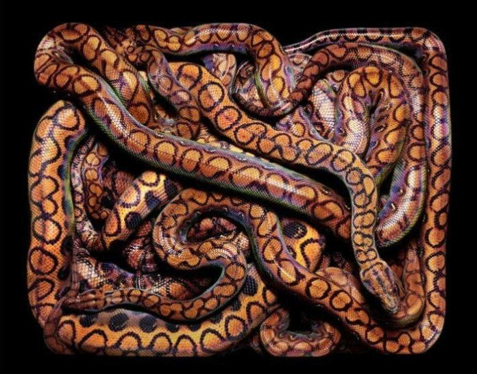 colorful-snakes-16-photos- (14)