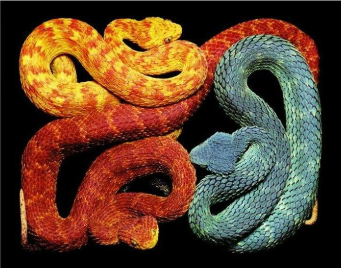 colorful-snakes-16-photos- (15)