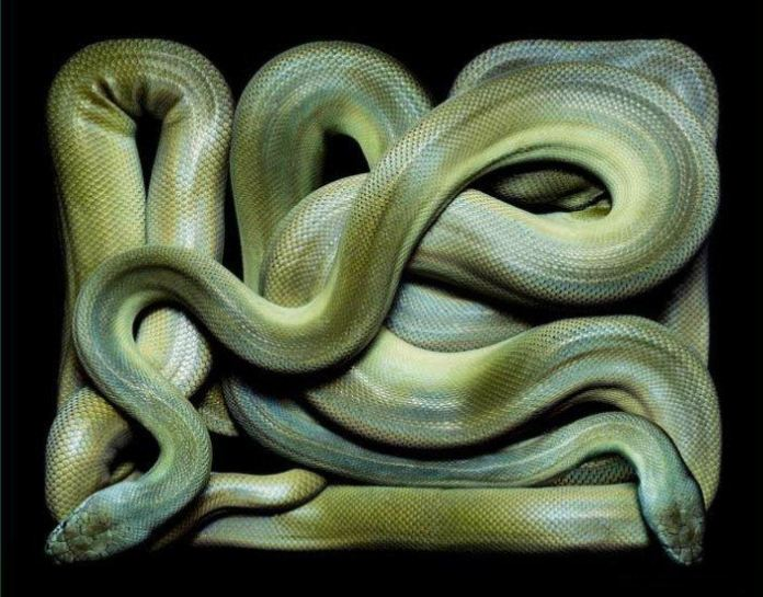 colorful-snakes-16-photos- (8)