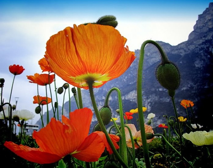 flower-with-sky- (5)
