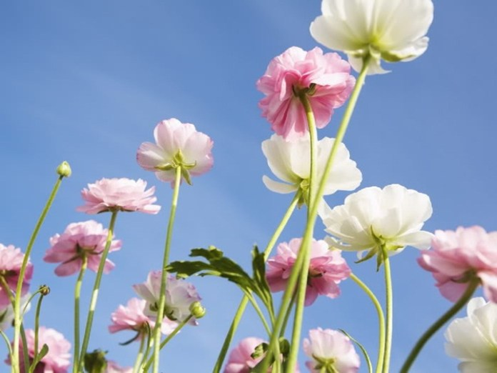 flower-with-sky- (7)