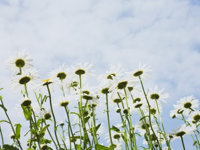 flower-with-sky- (11)