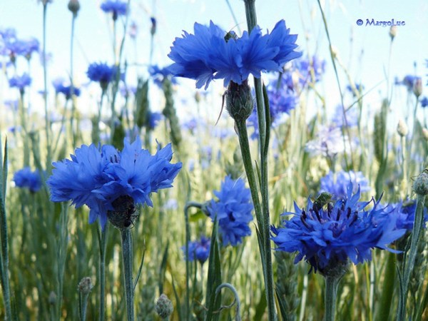 life-in-blue- (10)