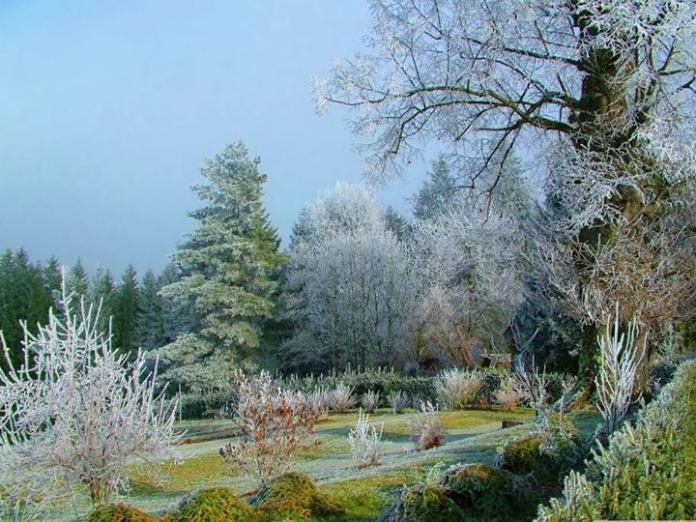 snow-in-autumn- (15)