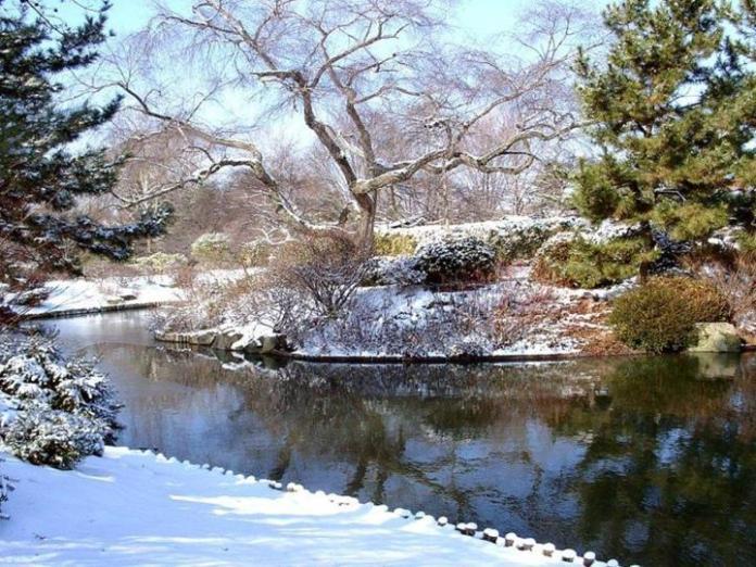 snow-in-autumn- (9)
