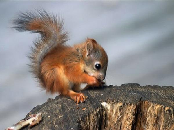 adorable-baby-animals- (3)