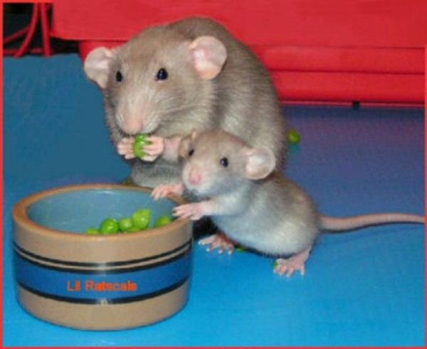 adorable-baby-animals- (7)