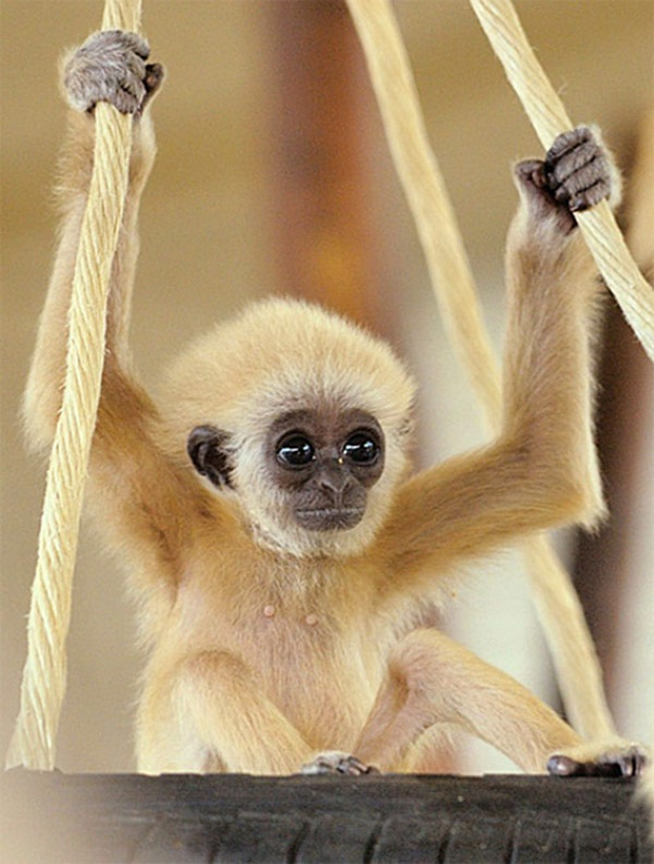 adorable-baby-animals- (11)