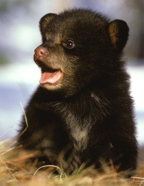 adorable-baby-animals- (18)
