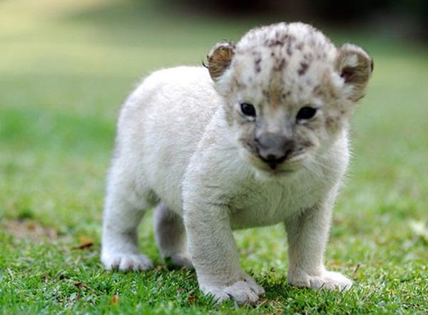 adorable-baby-animals- (21)