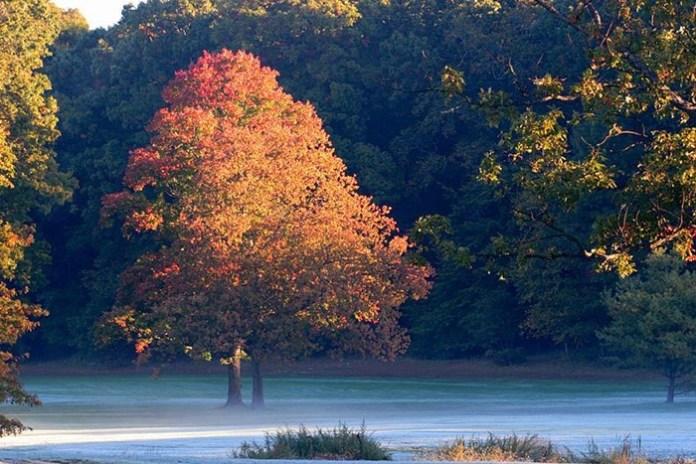 beauty-of-autumn- (8)