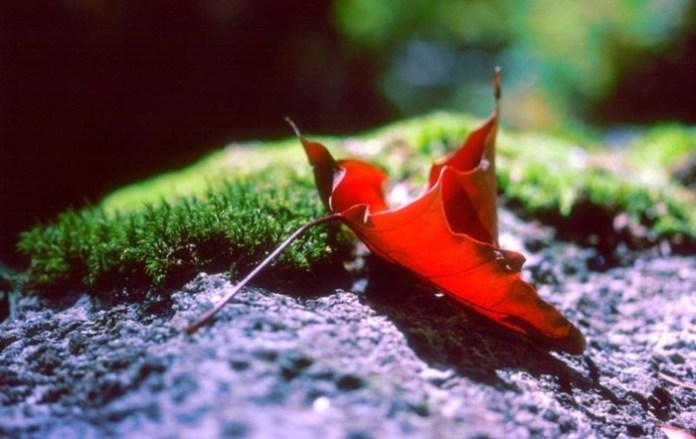 beauty-of-autumn- (24)