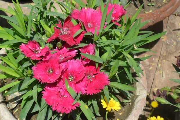 colorful-spring-flowers- (14)