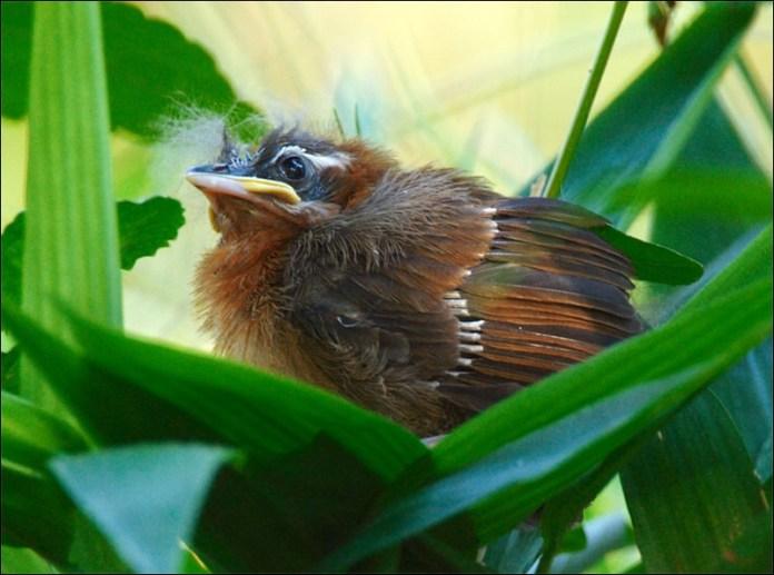 cute-baby-birds- (2)