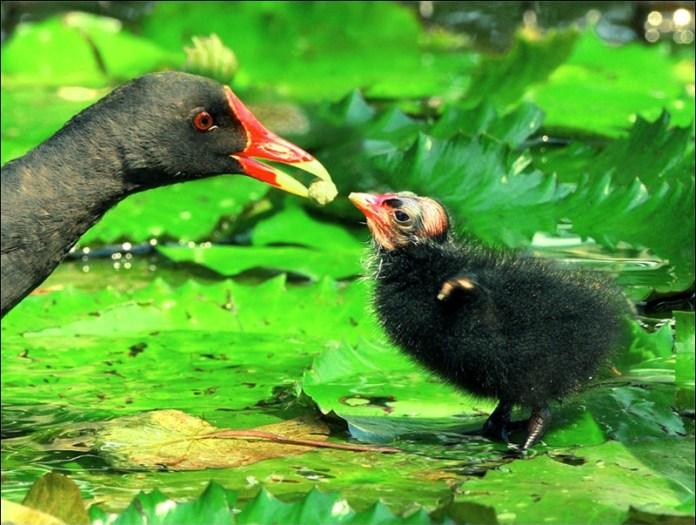 cute-baby-birds- (14)