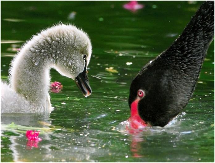 cute-baby-birds- (18)