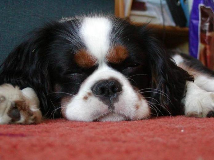 cute-dogs-photos- (19)