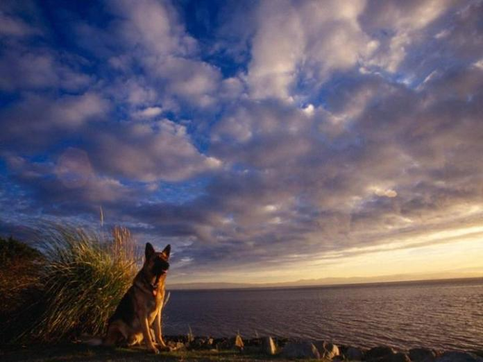 cute-dogs-photos- (27)
