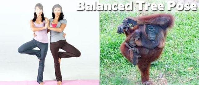 yoga-and-animals- (1)