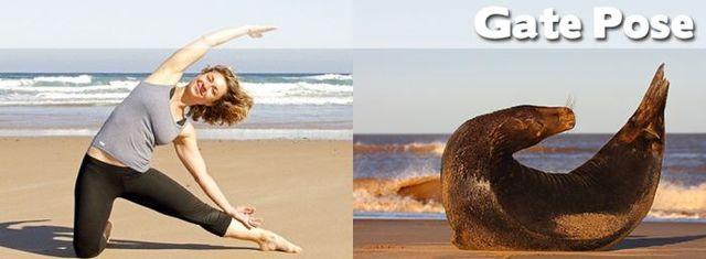 yoga-and-animals- (16)