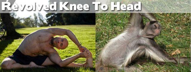 yoga-and-animals- (18)