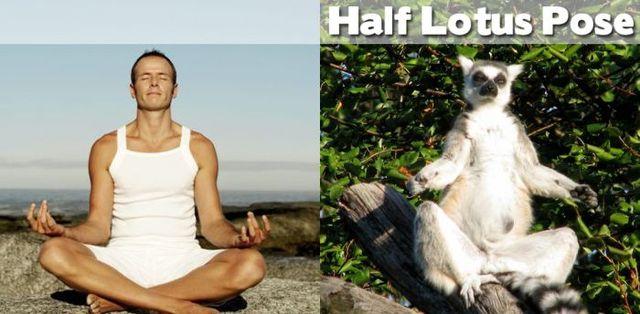 yoga-and-animals- (21)