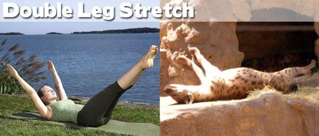 yoga-and-animals- (4)