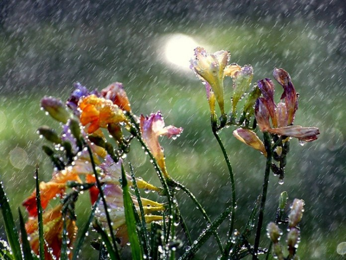 beautiful-rain-pictures-45-photos- (44)