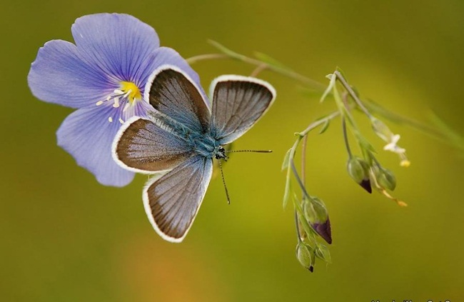 colorful-butterflies-26-photos- (2)