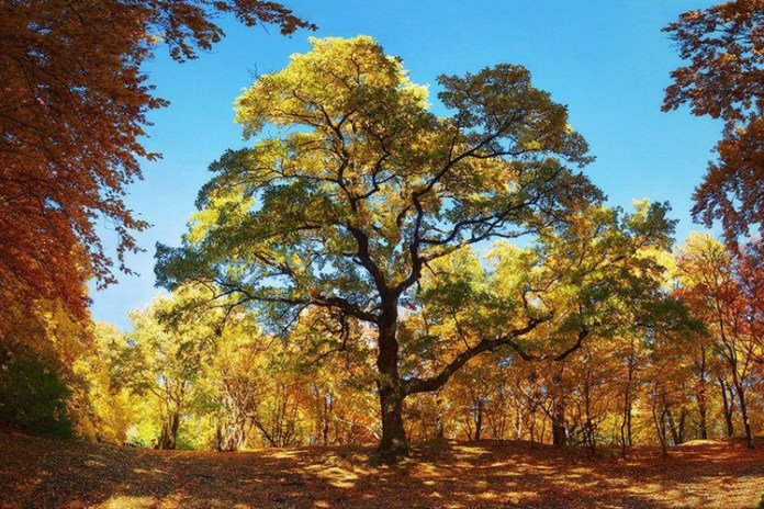 fabulous-nature-scenery-25-photos- (9)